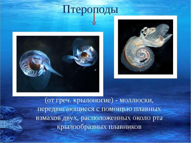 (от греч. крылоногие) - моллюски, передвигающиеся с помощью плавных взмахов...