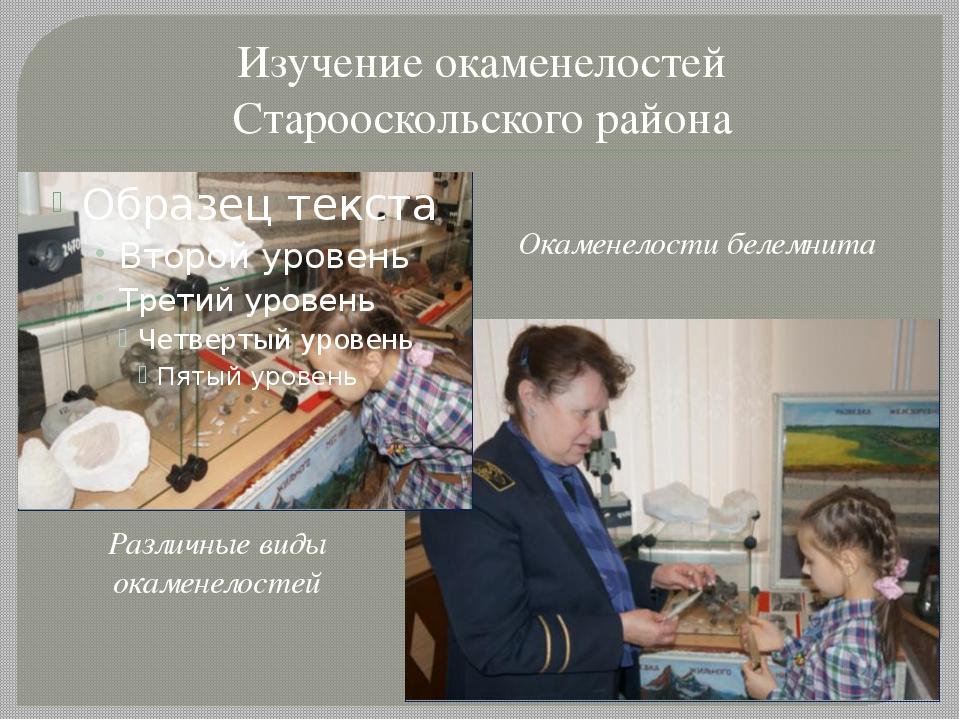 Изучение окаменелостей Старооскольского района Окаменелости белемнита Различн...