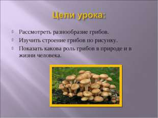 Рассмотреть разнообразие грибов. Изучить строение грибов по рисунку. Показать