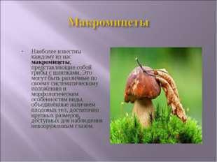 Наиболее известны каждому из нас макромицеты, представляющие собой грибы с шл