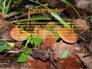 Большинство макромицетов селится на всевозможных растительных остатках – опав