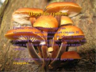 Грибы – это отдельное царство организмов, насчитывающее свыше 80 тысяч видов,