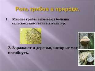 1. Многие грибы вызывают болезнь сельскохозяйственных культур. 2. Заражают и