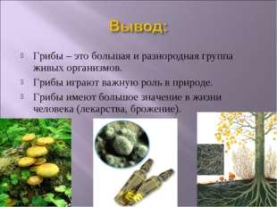 Грибы – это большая и разнородная группа живых организмов. Грибы играют важну