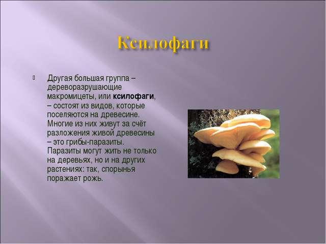 Другая большая группа – дереворазрушающие макромицеты, или ксилофаги, – состо...