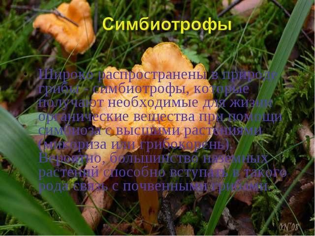 Широко распространены в природе грибы - симбиотрофы, которые получают необход...