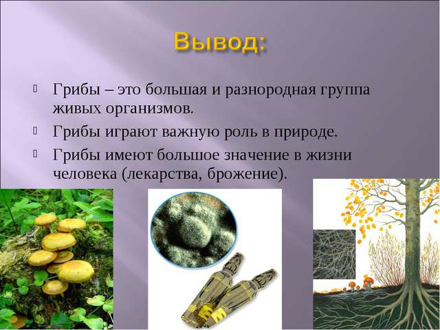 Грибы – это большая и разнородная группа живых организмов. Грибы играют важну...