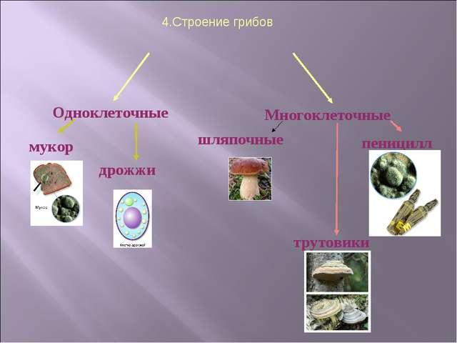 4.Строение грибов Одноклеточные Многоклеточные мукор дрожжи шляпочные пеници...
