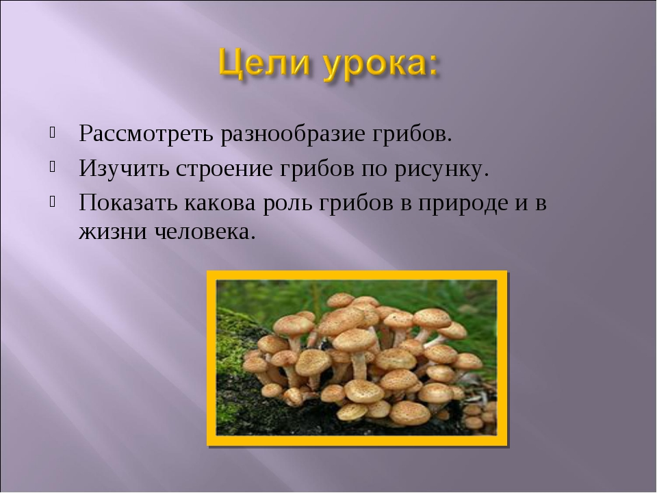 Рассмотреть разнообразие грибов. Изучить строение грибов по рисунку. Показать...