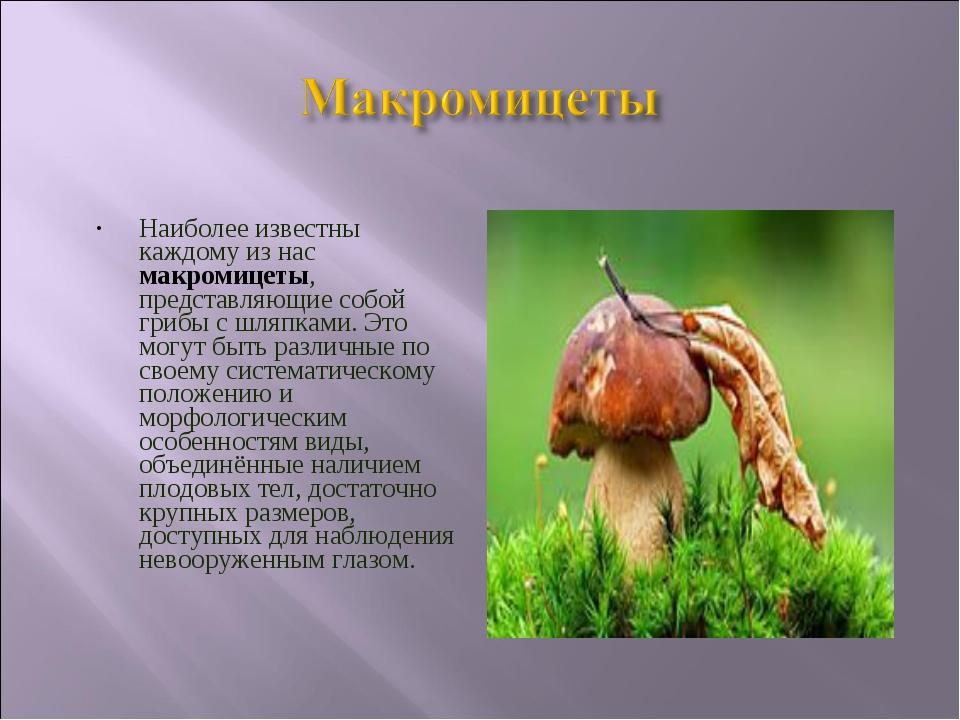Наиболее известны каждому из нас макромицеты, представляющие собой грибы с шл...