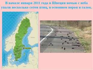 В начале января 2011 года в Швеции ночью с неба упали несколько сотен птиц, в