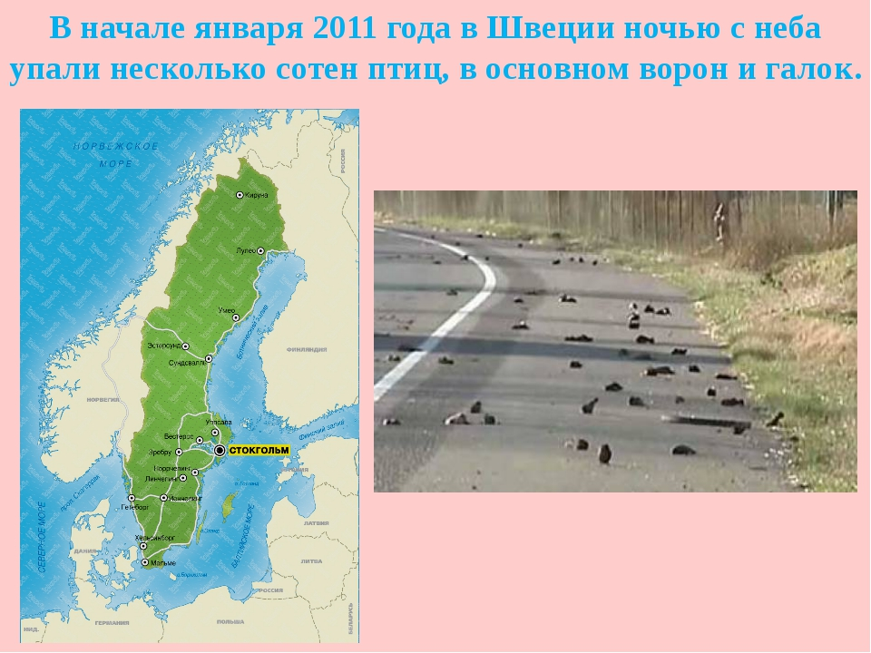 В начале января 2011 года в Швеции ночью с неба упали несколько сотен птиц, в...