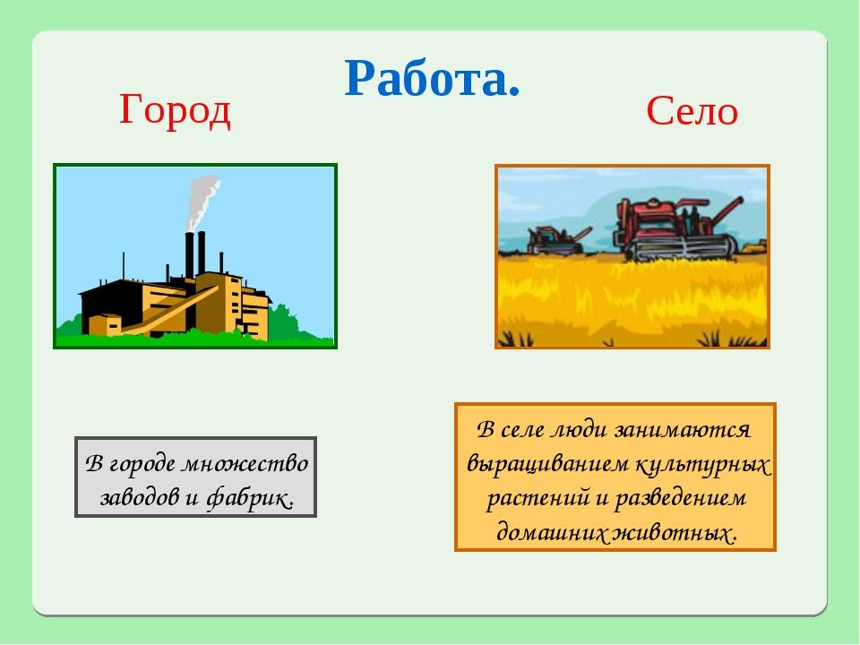 Работа. Город Село В селе люди занимаются выращиванием культурных растений и...