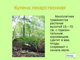 Купена лекарственная Многолетнее травянистое растение высотой 15—70 см, с гор