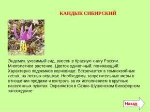 КАНДЫК СИБИРСКИЙ Эндемик, уязвимый вид, внесен в Красную книгу России. Многол