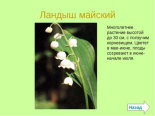 Ландыш майский Назад Многолетнее растение высотой до 30 см, с ползучим корнев