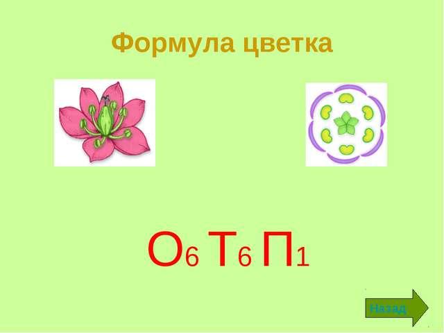 Формула цветка О6 Т6 П1 Назад