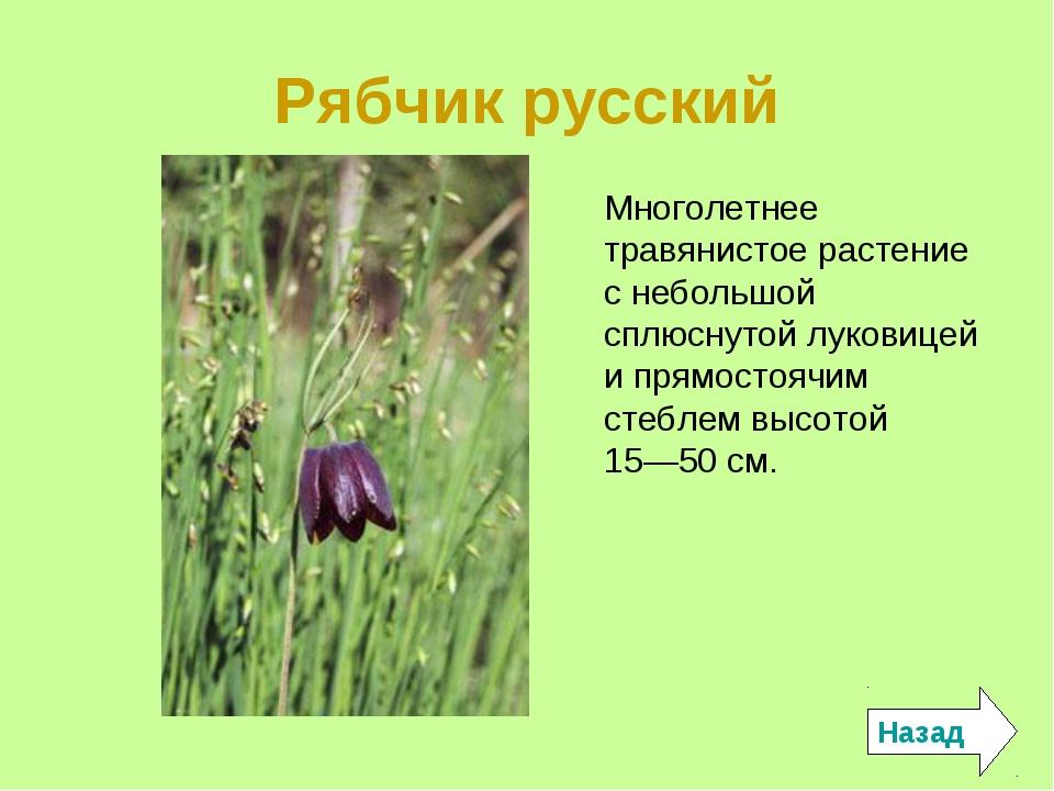 Рябчик русский Назад Многолетнее травянистое растение с небольшой сплюснутой...