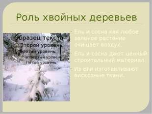 Роль хвойных деревьев Ель и сосна как любое зеленое растение очищает воздух.