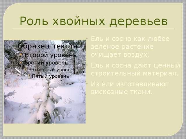 Роль хвойных деревьев Ель и сосна как любое зеленое растение очищает воздух....