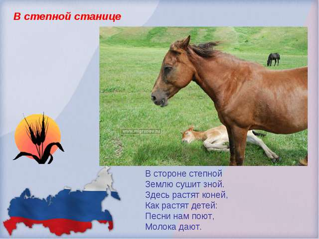 В степной станице В стороне степной Землю сушит зной. Здесь растят коней, Как...