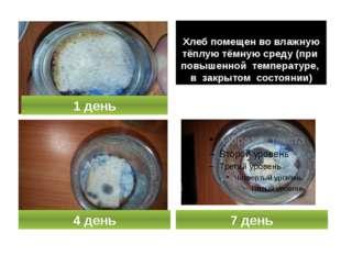 Хлеб помещен во влажную тёплую тёмную среду (при повышенной температуре, в з