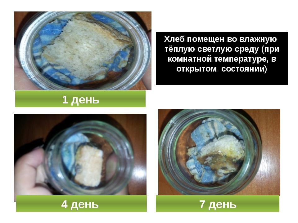 Хлеб помещен во влажную тёплую светлую среду (при комнатной температуре, в о...