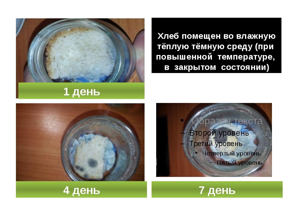 Хлеб помещен во влажную тёплую тёмную среду (при повышенной температуре, в з...