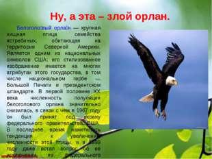 Ну, а эта – злой орлан. Белоголо́вый орла́н — крупная хищная птица семейства