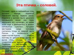 Эта птичка – соловей. Соловей- одна из любимейших птиц русского народа, перн