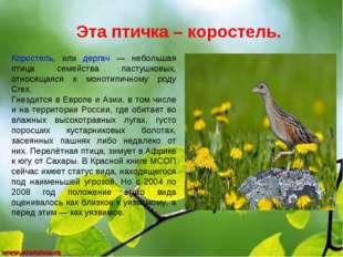 Эта птичка – коростель. Коростель, или дергач — небольшая птица семейства пас