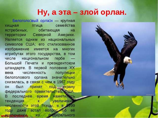 Ну, а эта – злой орлан. Белоголо́вый орла́н — крупная хищная птица семейства...