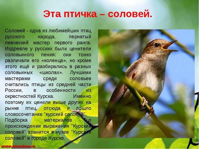 Эта птичка – соловей. Соловей- одна из любимейших птиц русского народа, перн...