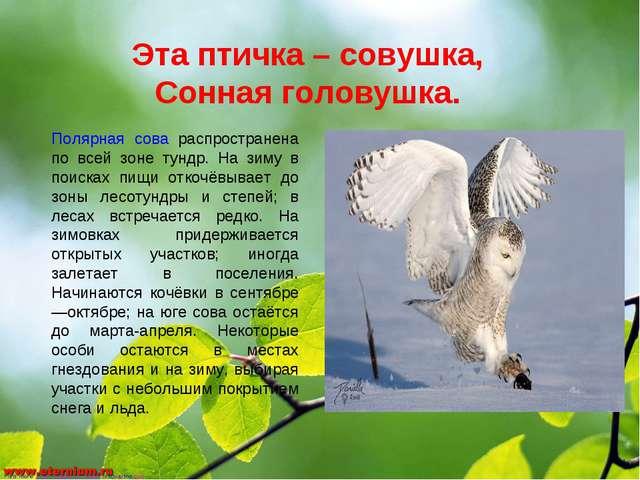 Эта птичка – совушка, Сонная головушка. Полярная сова распространена по всей...