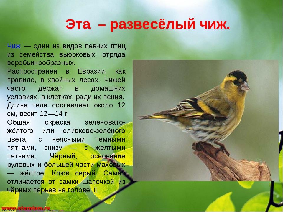 Эта – развесёлый чиж. Чиж — один из видов певчих птиц из семейства вьюрковых,...