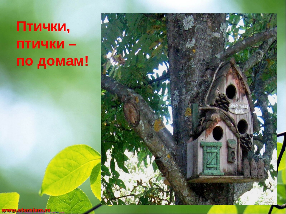 Птички, птички – по домам!