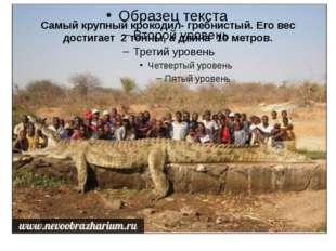 Самый крупный крокодил- гребнистый. Его вес достигает 2 тонны, а длина 10 мет