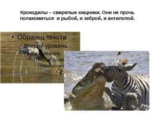 Крокодилы – свирепые хищники. Они не прочь полакомиться и рыбой, и зеброй, и