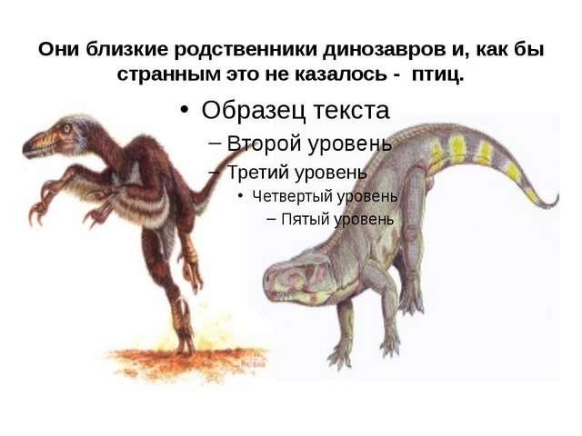 Они близкие родственники динозавров и, как бы странным это не казалось - птиц.