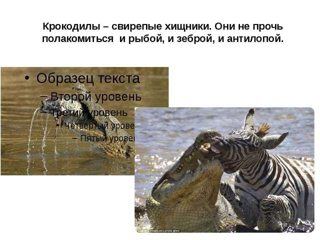 Крокодилы – свирепые хищники. Они не прочь полакомиться и рыбой, и зеброй, и...