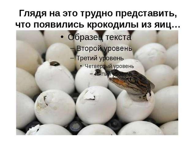 Глядя на это трудно представить, что появились крокодилы из яиц…