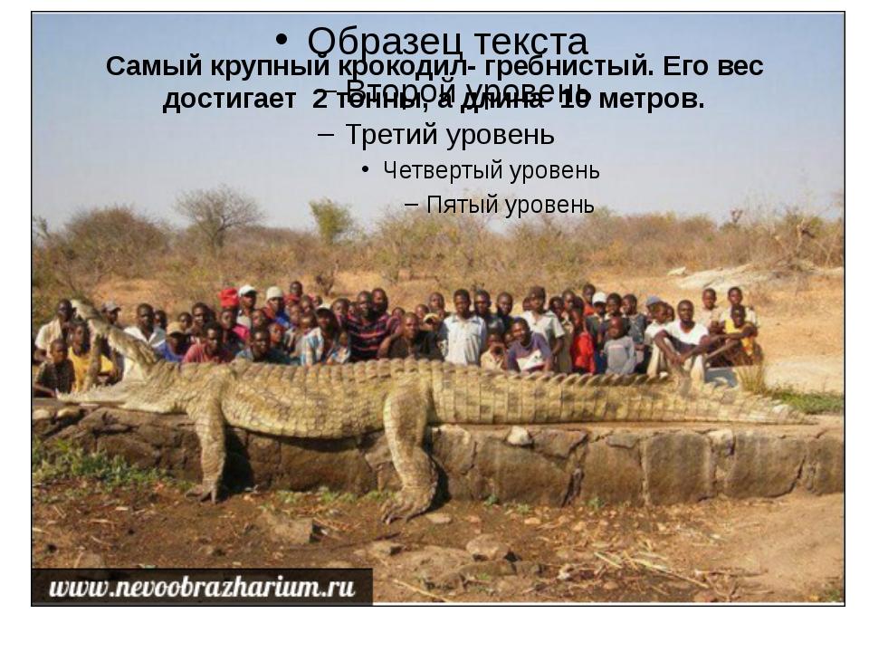Самый крупный крокодил- гребнистый. Его вес достигает 2 тонны, а длина 10 мет...