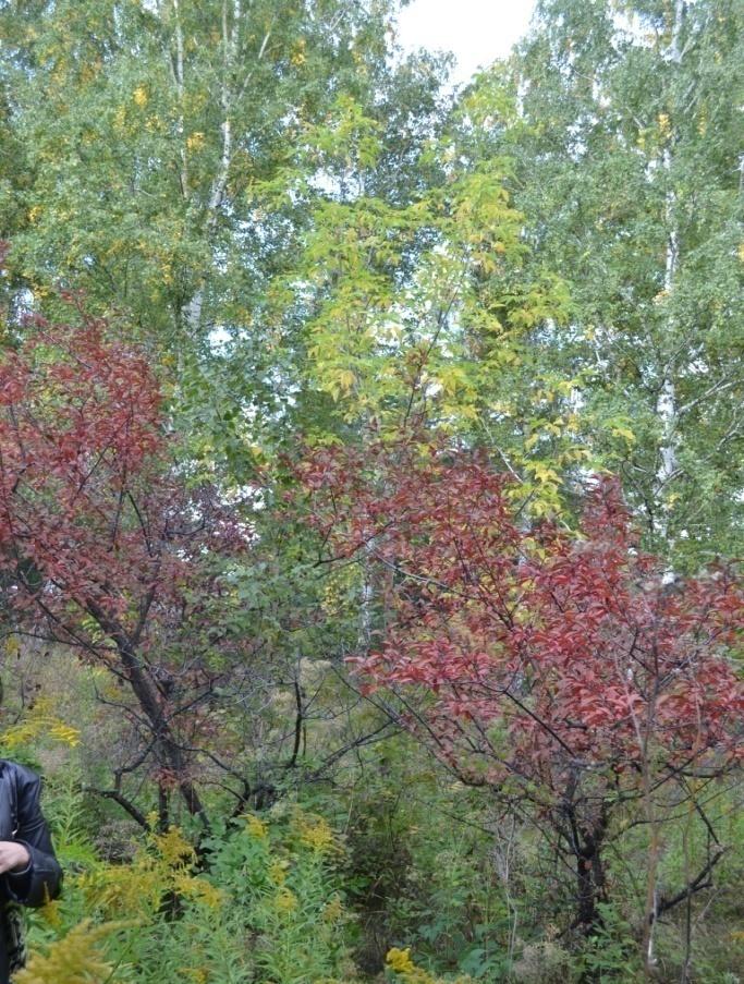D:\Mама\Фото\Барнаул\14.09.14 дендрарий\DSC_0008.JPG