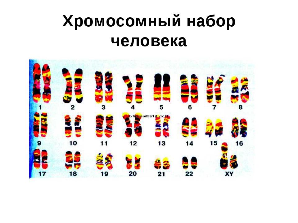 Хромосомный набор человека