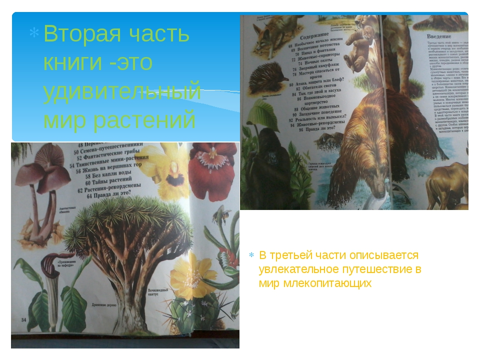Вторая часть книги -это удивительный мир растений В третьей части описываетс...