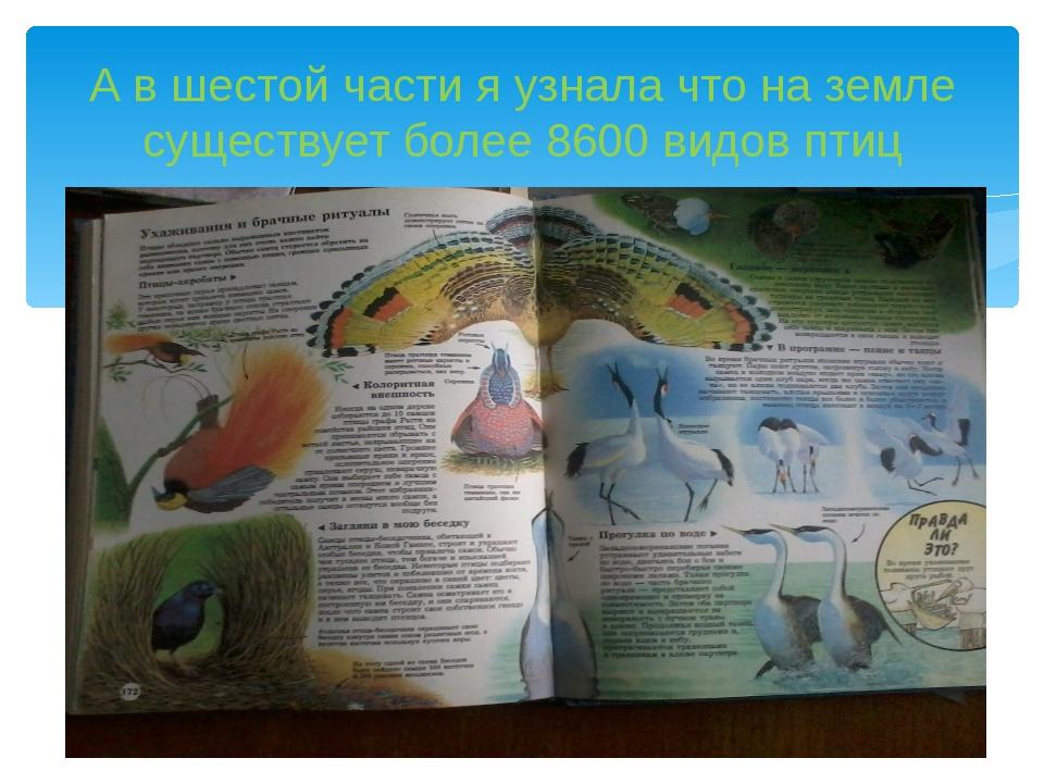 А в шестой части я узнала что на земле существует более 8600 видов птиц
