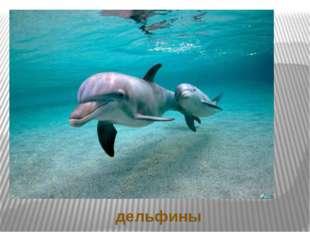 Ответы на загадки дельфины