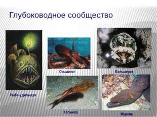 Глубоководное сообщество Рыба-удильщик Большерот Мурена Осьминог Кальмар