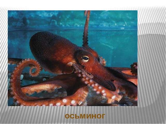 Ответы на загадки осьминог