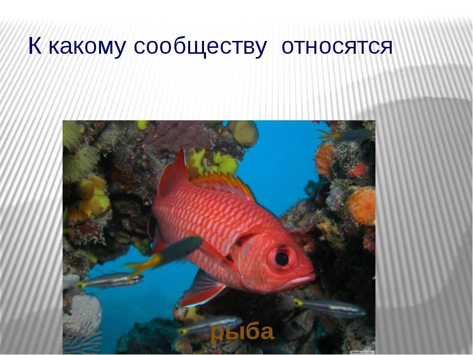 К какому сообществу относятся рыба